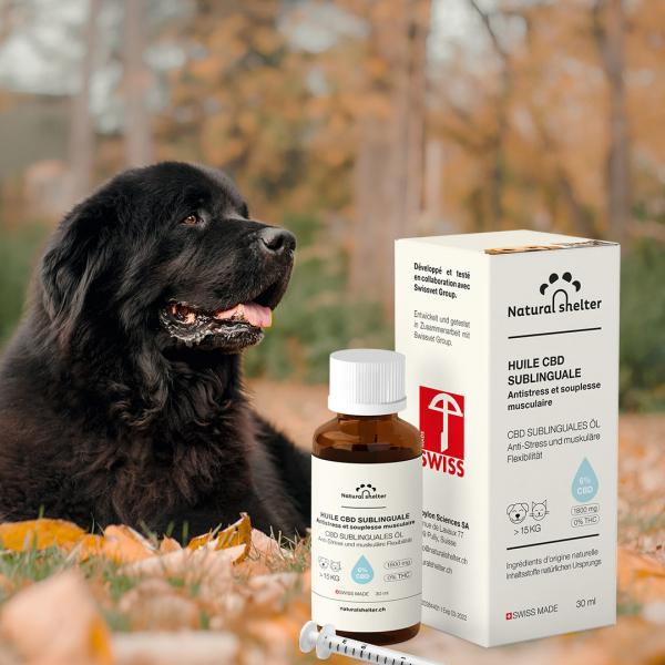 Cure 6 mois Huile CBD Sublinguale 6% pour chiens (+15kg)